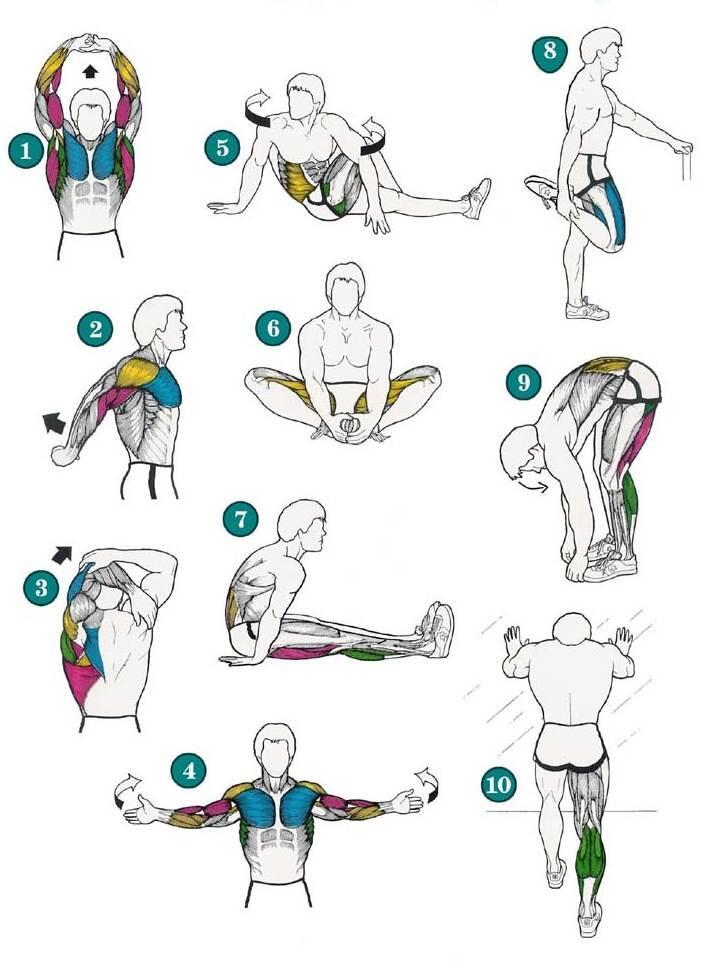 Una pequeña guía de estiramientos, con los músculos que intervienen en cada posición: ¡estírate! http://t.co/zkfr1apQL7