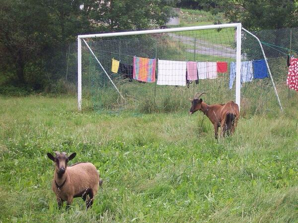 The spanish defense tonight. #WorldCup2014 http://t.co/gTcn4r8JzK