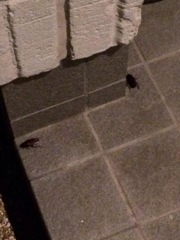 久々に実家帰ってきたら2匹揃ってお出迎えしてくれました。死ね。 http://t.co/YxwEmD95IQ