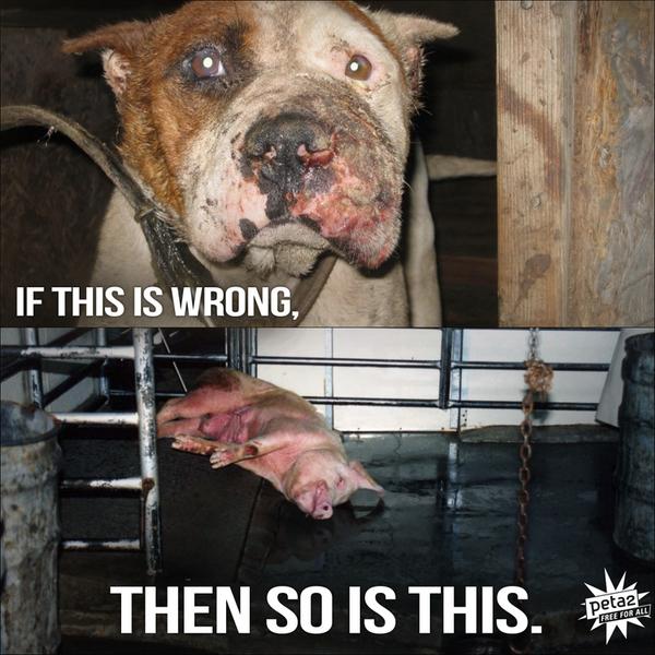 animal abuse is wrong