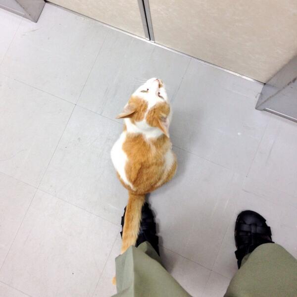 三重大の猫さん、エレベータに乗ってきた http://t.co/mtG8vl1UzX