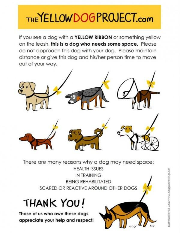 If you see a dog with a yellow ribbon or something yellow on the leash, the dog needs space: http://t.co/KP5ktFOB6n http://t.co/tycW9CAaUS