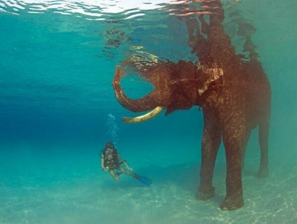 Swimming with elephants in Thailand http://t.co/2SJsOr9hi7