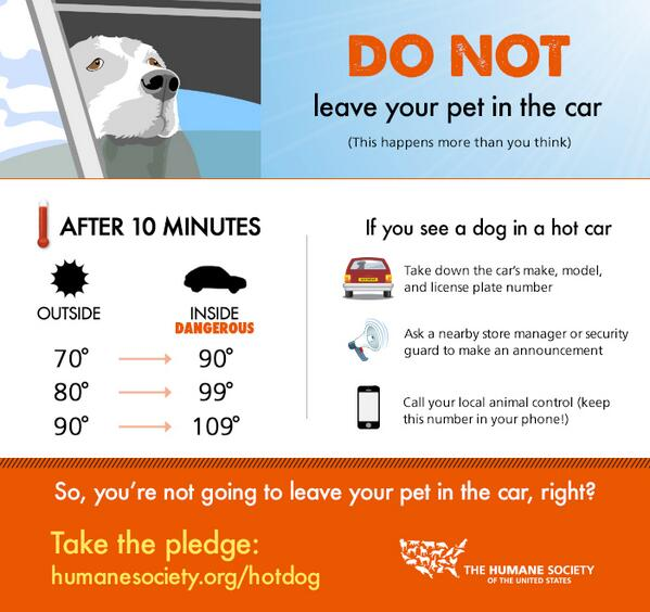 Never leave your pet in the car, not even for a second! Spread the word, you may save a life! http://t.co/4nOwOUYGrD
