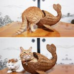 RT @CatPornx: Whale cat . http://t.co/sBuP5QqUVq