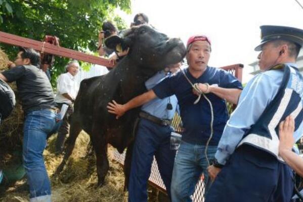 被ばく牛連れ、国に抗議 福島・浪江の畜産農家・吉沢正巳さん。http://t.co/Zqr3Z4ZsMZ霞が関の農水省前で吉沢さんは、「40年間、福島県は東京のために電気を送ったのに、おれたちは今捨てられるんだ」と怒りをぶつけた。 http://t.co/QAs478PSB3