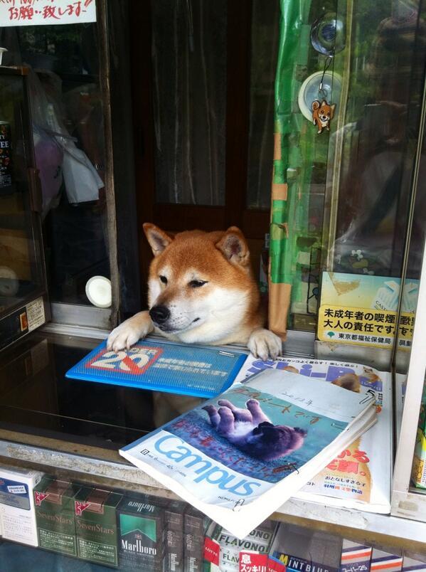 武蔵小金井の有名店でタバコを買いました。 気持ちの良い接客態度でした(∵) http://t.co/9CpJs9eM6v