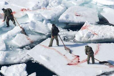 TRADITION DOESN'T EXCUSE CRUELTY.  End full time fishermen killing seals for off-season sport http://t.co/WT8PiLWmvP http://t.co/6WT8jUdxe4