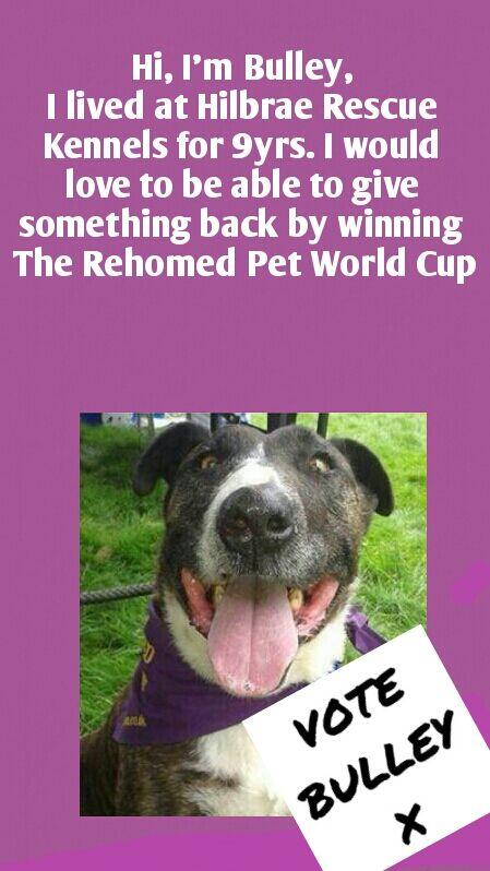 MT @BulleyBufton I need votes NOW during ROUND TWO of The Rehomed Pet World Cup.  https://t.co/zVcZ8nDYlW   http://t.co/QGVA9uFMlI
