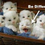 RT @CatPornx: Be Different .: http://t.co/LyFh9Z7EcX