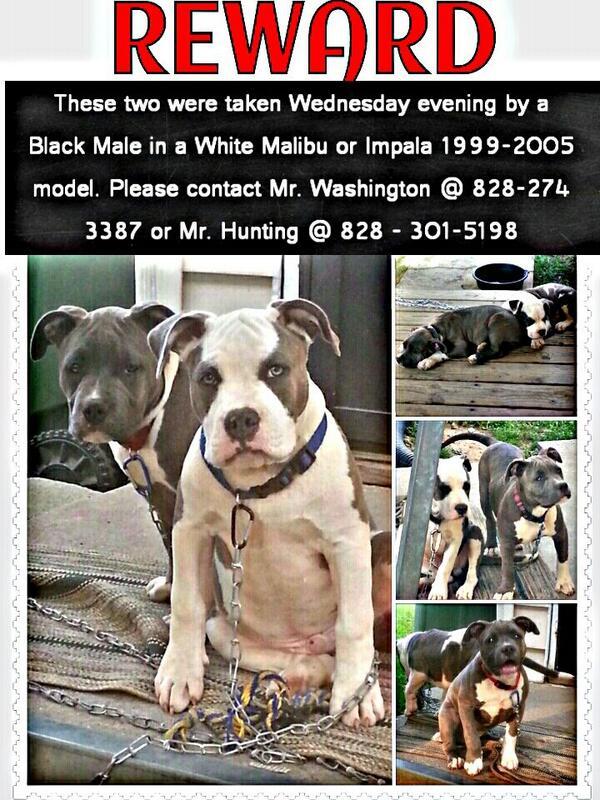 2 Dogs Stolen, please help. #avlpets RT @PrinceEatgreedy: #asheville http://t.co/yTQGpuM3bt