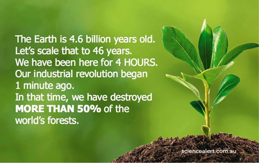 RT @oneMtrees: #millionfacts #oneMtrees #trees #forest #earth #enviroment http://t.co/rmpN06m05L