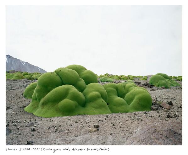 Artist @_sussman_ photographed living organisms that are 2,000 years old and older. #PDNPOTD http://t.co/eHQtx9Puoe http://t.co/gPjRel3poO