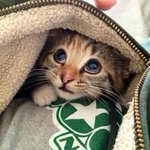 "RT @CatPornx: ""Am I safe here?"" . http://t.co/wjxinLUoMr"