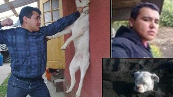"""@mavepaws: @maxbeesley7 Please sign and share this is horrible http://t.co/DE3EnAZujd http://t.co/X3z8Qv7MkH""SIGN N RT"" cowardly c%#t"