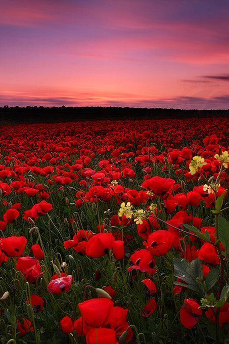 RT @ThatsEarth Poppy Field Sunset, Italy http://t.co/7IwgfFW4zX