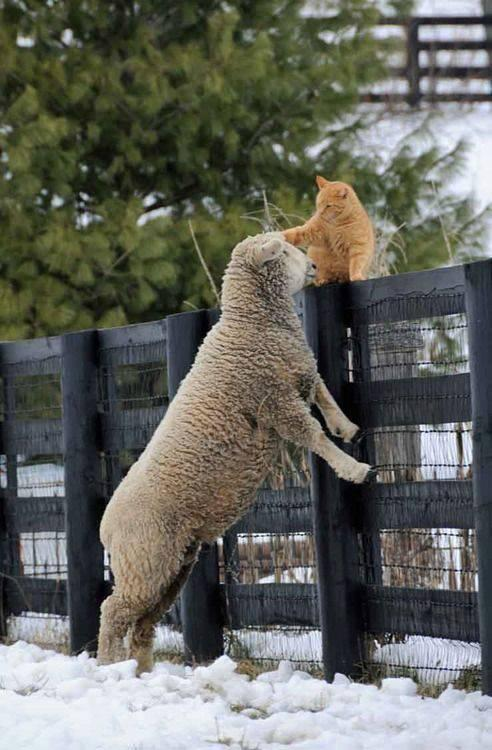 'ok sheep .. we can be friends' !!! http://t.co/V3aOdftSYV http://t.co/qsuuoUokt0  ☼