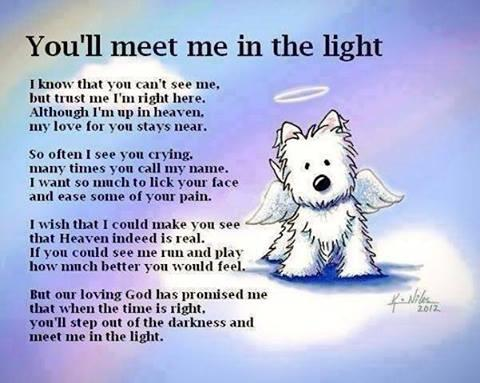 Aww! :*) RT @shygirl2177: @iLoveDogsInc @iLovePetsDaily Thought U would like this little prayer from a dog's vew http://t.co/HUn9ZPFdyJ