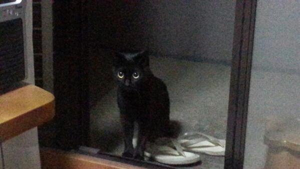 昨夜はベランダに来客がありまして!にゃあ~。。ここマンションの8階なんです!最初は警戒してましたがすぐに打ち解けゴロゴロぉ~。。 http://t.co/haf8uyAuNI