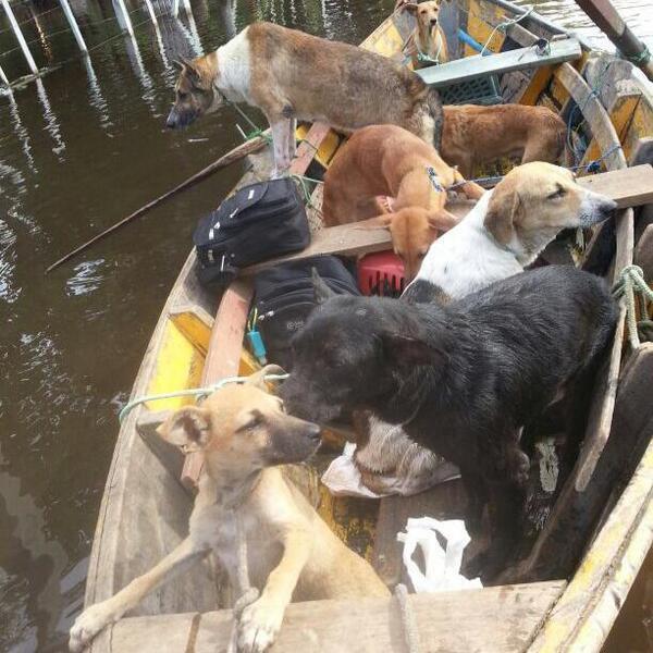 Ellos representan una de las caras de la tragedia de la inundación: las mascotas abandonadas. Foto: @Refugio_Banadit http://t.co/mi2KUHj27F