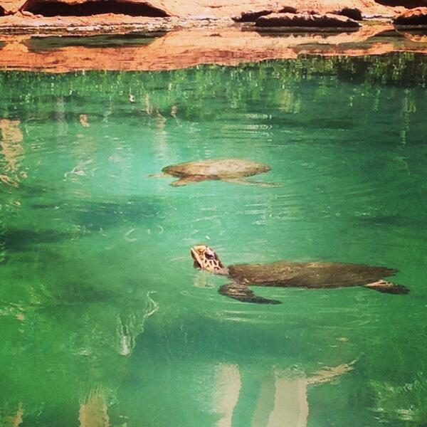 We enjoyed a quiet moment to ourselves watching the turtles at Atlantis Resort, Bahamas #OasisoftheSeas @MyRoyalUK http://t.co/Lg5JWwIaot