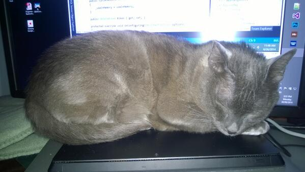 Dear Kitteh, my @surface Pro is not a heat pad. http://t.co/0w7n4oR65n