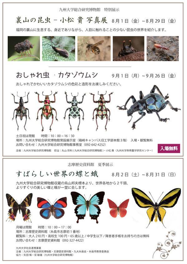 今年の夏の昆虫展示です。いろいろやります(^ω^) http://t.co/SDxPiwRlHE