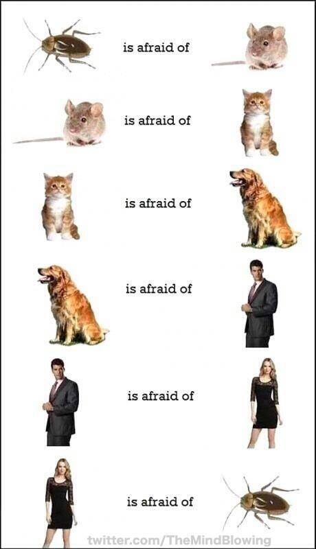 The circle of fear: http://t.co/UTgdN9LdXu