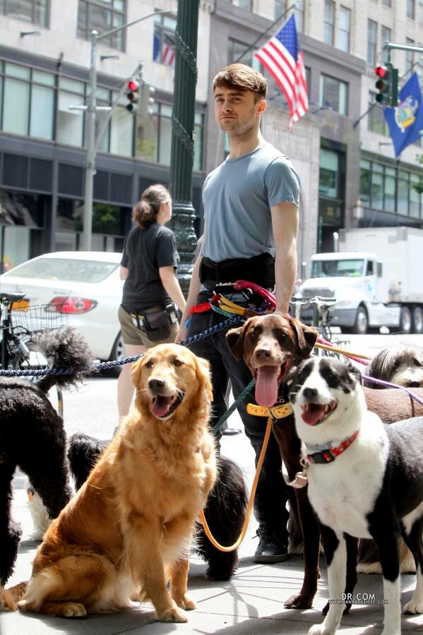 Apatow joked on Twitter that Radcliffe isn't in Trainwreck, and he was actually just walking his dogs.
