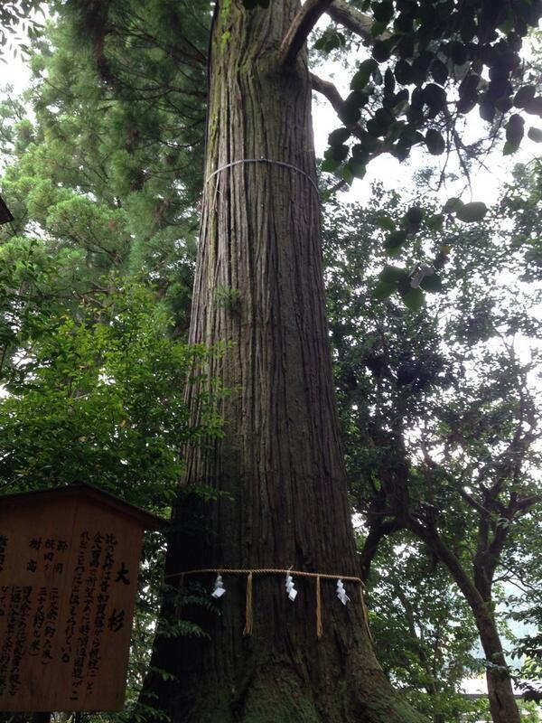やはり須佐神社の御神木のパワーはスゴイ❗️出雲國には不思議なことがいっぱいです^_^ http://t.co/th8tmvVab4