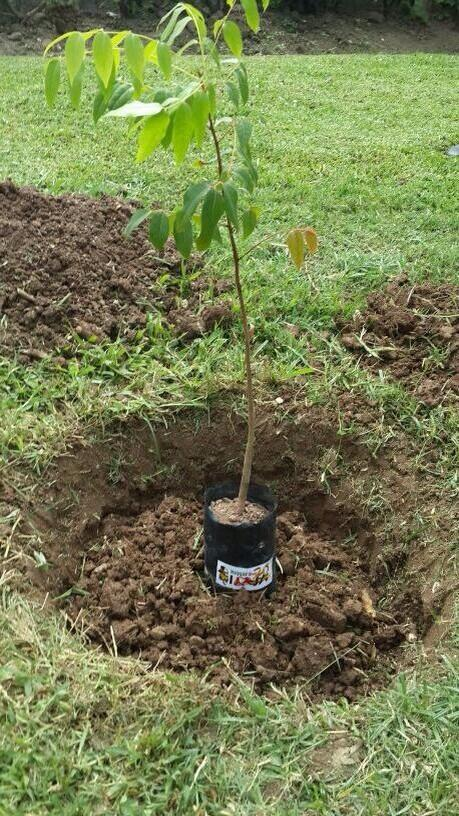 We planted our Reggae Tree at Emancipation Park just minutes ago. Show us your trees w/ the hashtag #iReggaeTree! http://t.co/0HBx4MRKHk