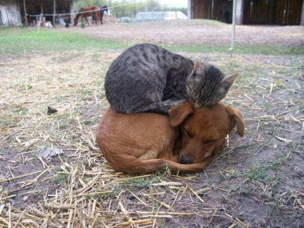 [Well, this is better than no pillow at all!] http://t.co/ukCcSpmpwJ
