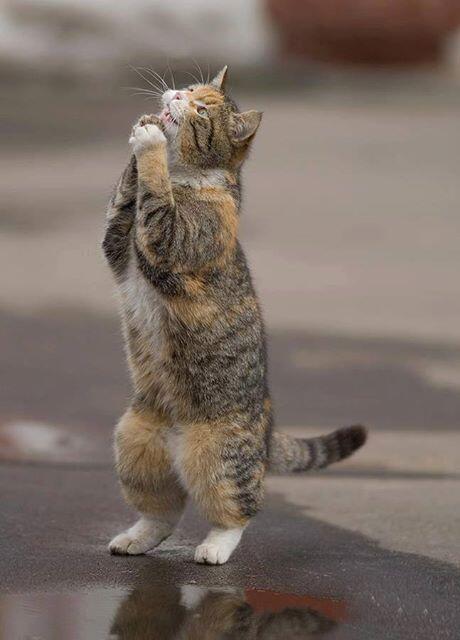 お願い~!私の願いを叶えて~にゃ~♬ http://t.co/0aoDVWrjPH