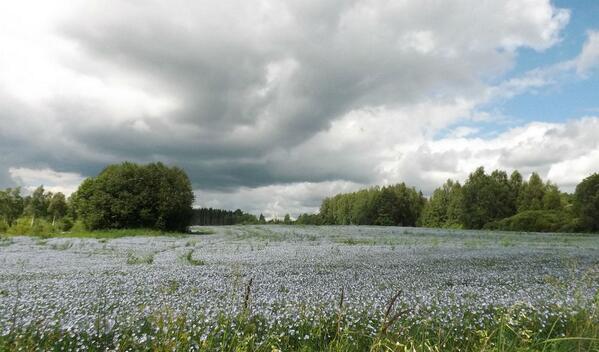 Sēlijā zied lini. http://t.co/0RiLuJycGk