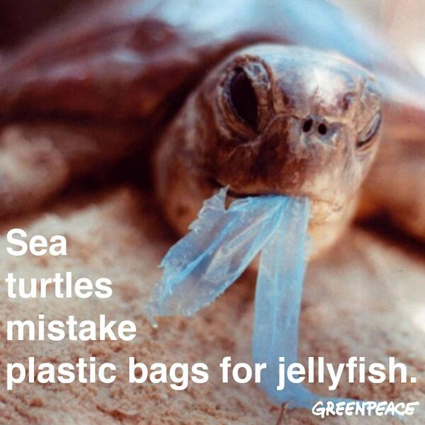 Yet another reason to ban plastic bags: Turtles mistake plastic bags for jellyfish #PlasticBagFreeDay #AyokoNgPlastik http://t.co/G8iSDOcRwV