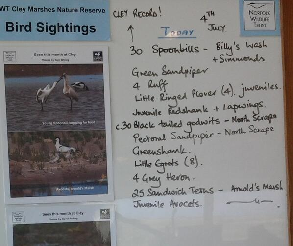 THIRTY spoonbills at Cley Marshes today! A new record for the reserve, possibly the UK in modern times? #birds http://t.co/C7SXyqiE7A