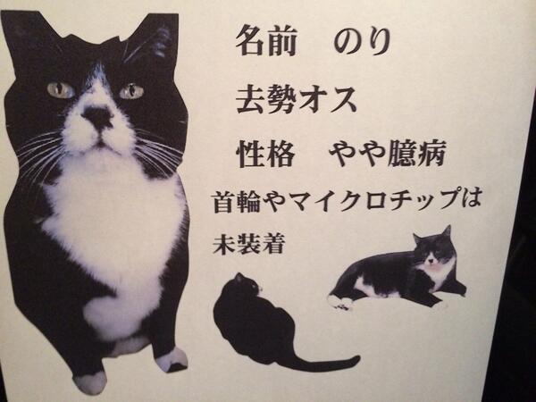 《拡散希望》6月30日深夜に黒白柄の猫が逃げてしまいました。場所は川崎市宮前区潮見台8丁目付近です。どんな情報でも構いません。ご連絡ください。 http://t.co/tsZLe1WqIG
