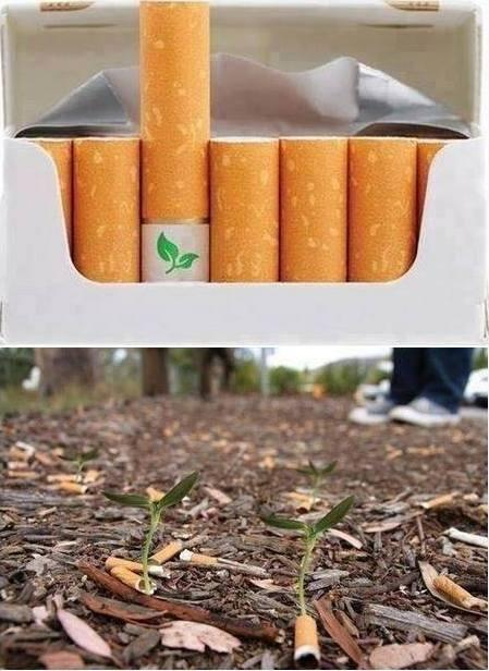 Biodegradable cigarette filters with flower seeds. http://t.co/vZd71ZQceO