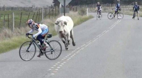 RT @JamieDMJ: The Yorkshire stage of the Tour de France is going as expected. http://t.co/6jFHvuDrNi