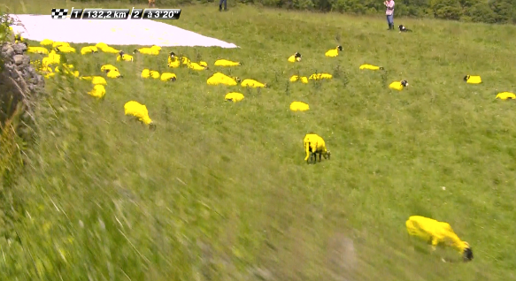 Yellow sheep!  http://t.co/BxUE9aXC12 http://t.co/0wiiGgkxCm