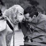 Cuando un perro ve a su dueño, su cerebro segrega las mismas sustancias como nosotros cuando estamos enamorados. http://t.co/i7pvbYX2LQ