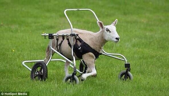 """@MichaelSmila: ""@abelwest_: Neymar coming out after half time like http://t.co/fjOHKbYlXF"""