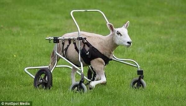 *Neymar coming out next half like* http://t.co/DdJUsFFmbN