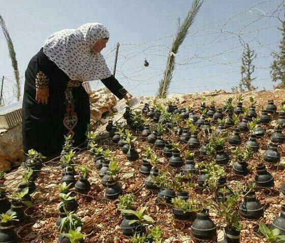 FOTO DEL DÍA: Mujer palestina recoge bombas de gas disparados por el ejército Israelí, y cultiva flores en ellas. http://t.co/3BeG0bc1SU