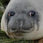 when you just coughed your lungs out and your friend asks if youre okay http://t.co/L1KaSAjvwY