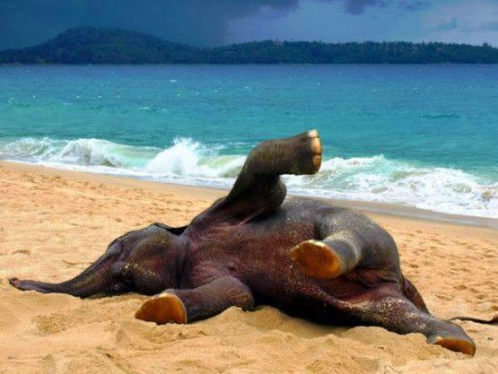 This baby elephant just saw the beach for the first time! http://t.co/1AT6locyAP