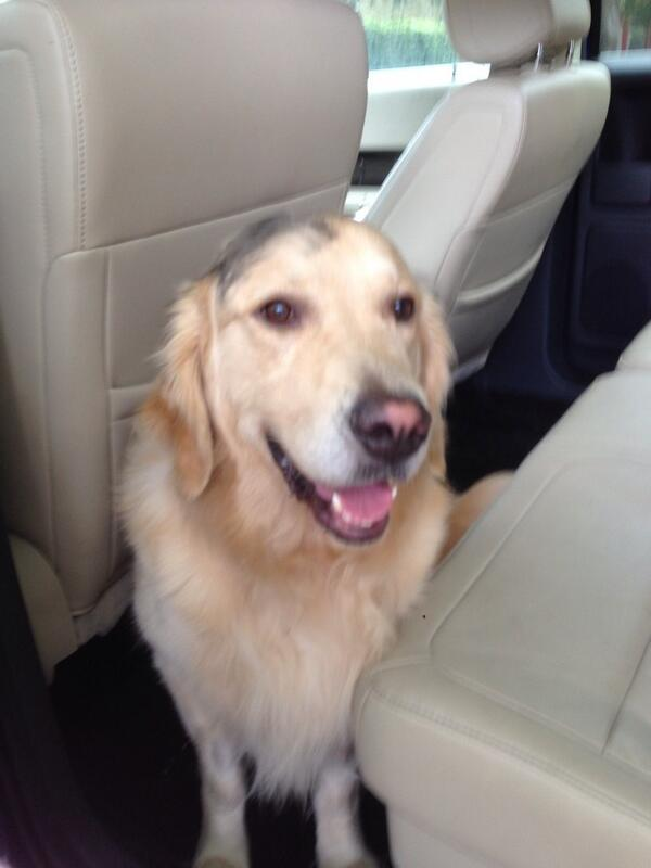 Found dog no collar. Taken to the VCA on Lincoln and Zanja this morning. @Venice311 @Vaultboard http://t.co/sbVunk1Zfv