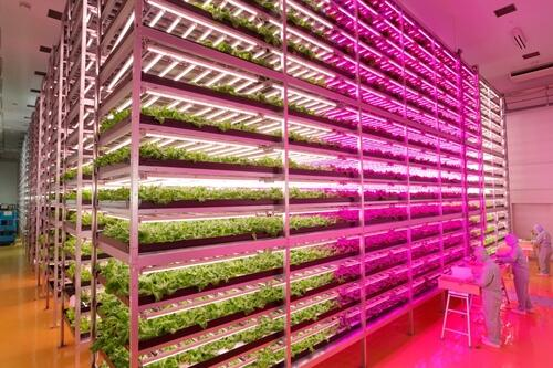 Future's here, we are now able to grow food indoors with artificial light at industrial scale: http://t.co/Xvkq1y0y8m http://t.co/X9UUAv5QvY
