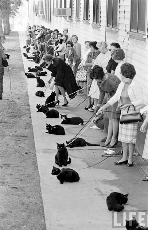 真ん中の白黒ねこの「おれ、違うじゃんよ」感がすごい(^ω^) RT> @maplecat_eve: 『黒猫の怨霊』(ロジャー・コーマン)のオーディションに集まったネコたち。 http://t.co/tdg7tYbAn0