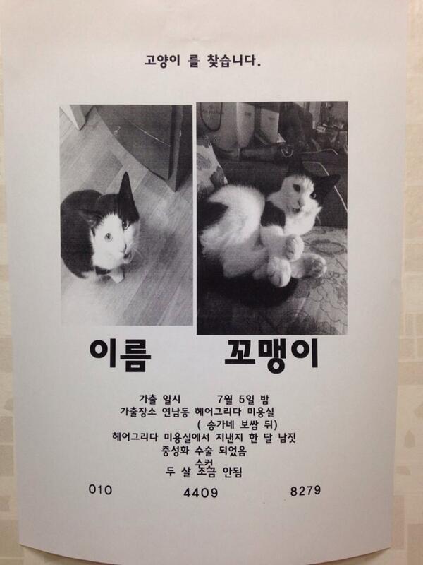 친한 형님 부탁으로... 고양이를 잃어버렸다고 합니다. 검은색&흰색의 남자애이며 연남동 주민 여러분들은 주위를 잘 둘러봐 주세요 http://t.co/PS8Dg2YEe2